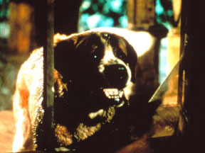 Deadliest Demon Dogs of Movies